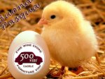 Buona Pasqua da Caorle!!!